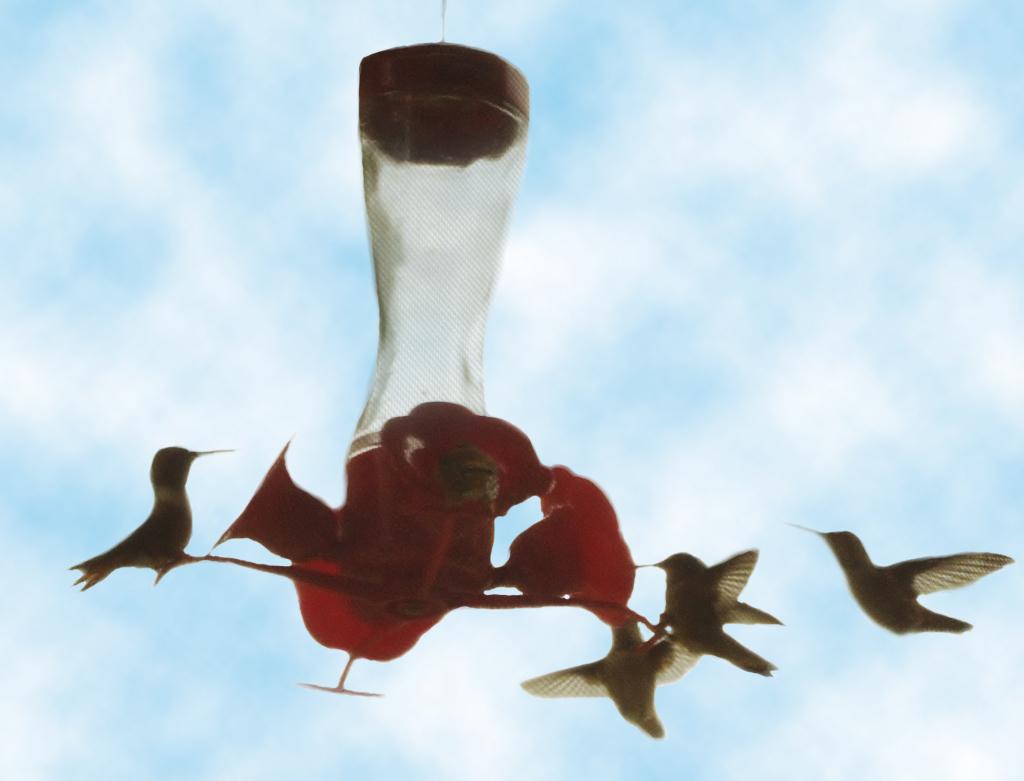 IMGP9040 (1024x781)hummingbirds
