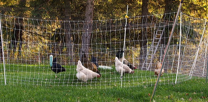 IMGP0791 chicken boundaries 2015